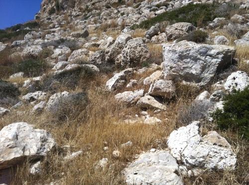 Kan du se øgla? De har fine kamuflasjefarger og gjemmer seg lett her ute. Den sitter for øvrig på den store steinen lit til høyre.