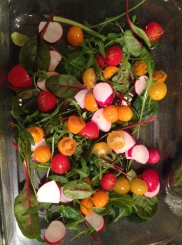 Sånn ser det nederste laget i formen ut. Baby Leafs, reddiker og cherrytomater. Du kan selvfølgelig bruke andre ting du har i kjøleskapet, paprika og agurk og avokado feks?